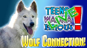 Teens-Wanna-Know-Wolf-Connection