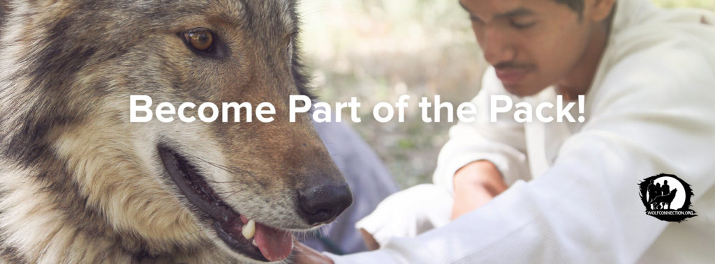 Become Part of the Pack